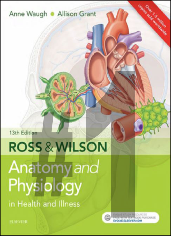 Anatomy & Physiology Radiology CE Credits